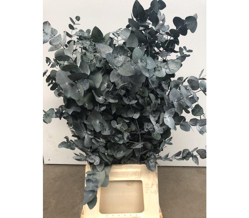 Eucalyptus Cinerea stabilisierte präparierte echte Blätter