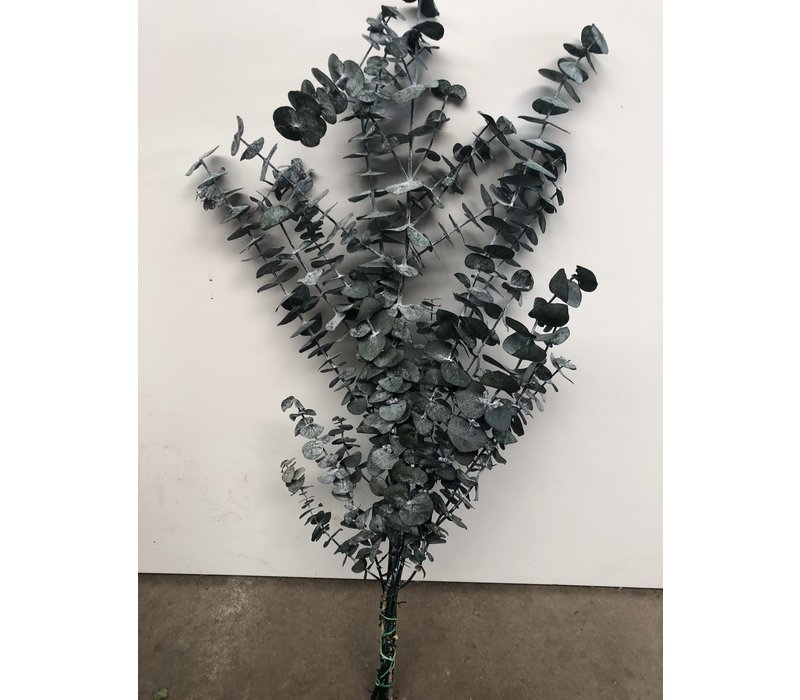 Eucalyptus Baby Blue stabilisierte präparierte echte Blätter