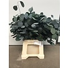 Eucalyptus Popolus  stabilisierte präparierte echte Blätter