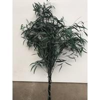 Eucalyptus Nicoli stabilisierte präparierte echte Blätter - Copy - Copy