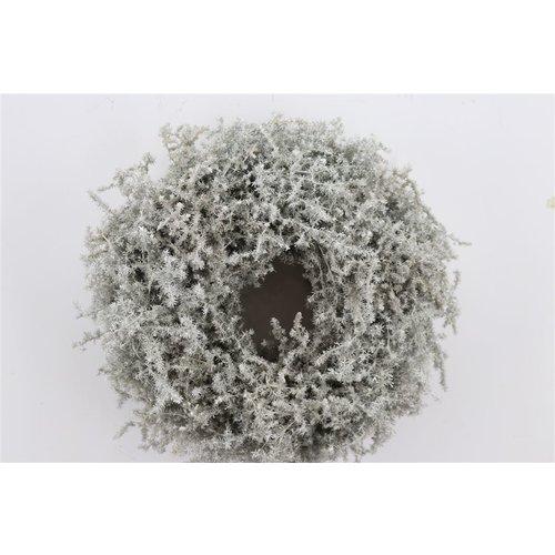 Dekokranz aus Asparagus (Weiß)