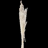 Paleone getrocknet und gebleicht pro Bund