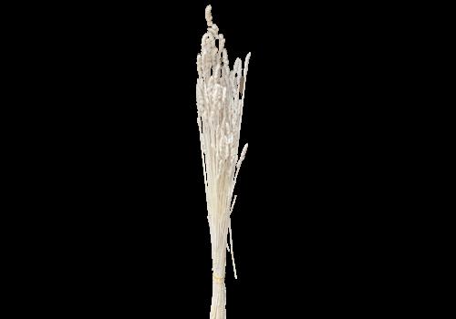 Paleone  getrocknet