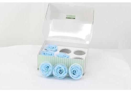 6 Konservierte Rosen Hell Blau