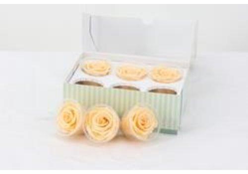 6 Konservierte Rosen Peach