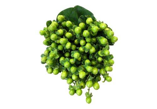 10 Hypericum Grün