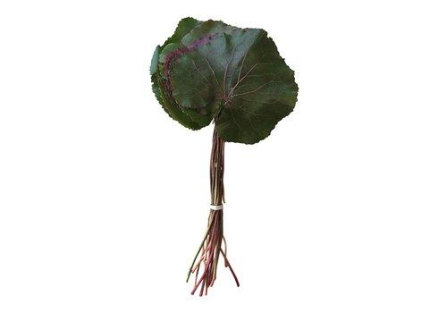 1 Bund Galax Blätter