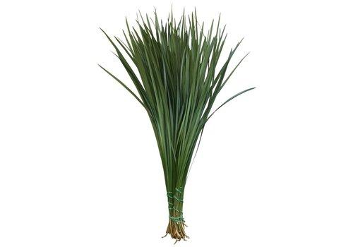 1 Bund Lilly Gras