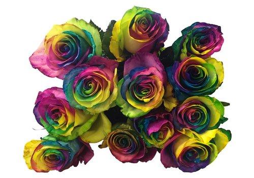 10 Rosen Rainbow