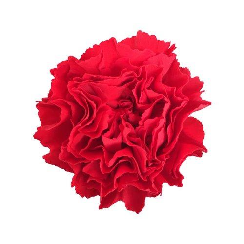 10 Edelnelken Rot