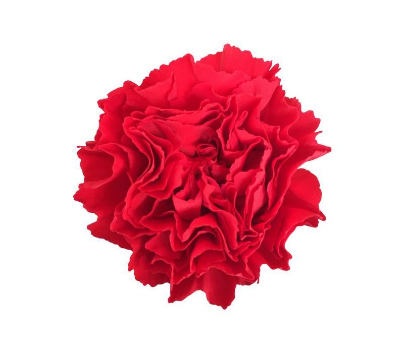 10 Edelnelken Rot - Nelson