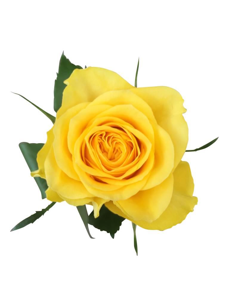 Außergewöhnlich 10 Gelbe Rosen im Bund online kaufen - bezahlbare-blumen.de &DT_38