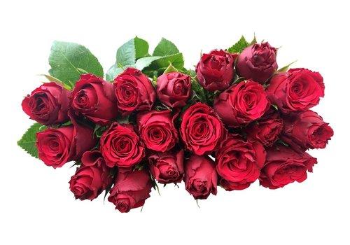 10 Rosen Rot Upper Class