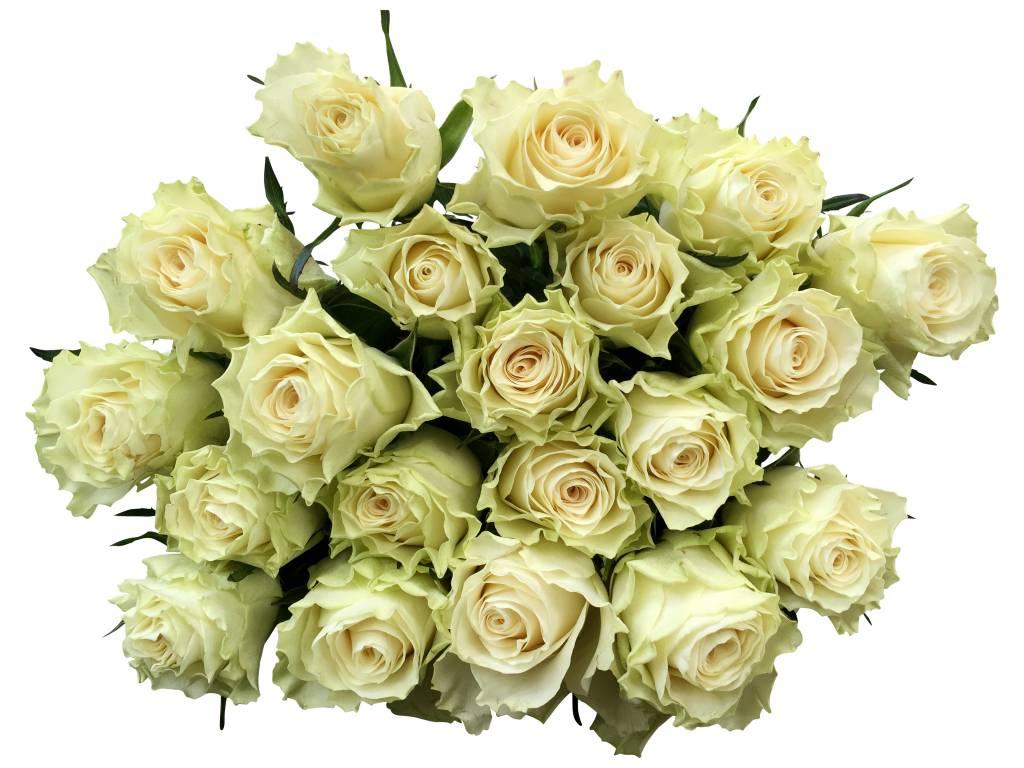 weisse rosen im bund  kaufen bezahlbare blumen