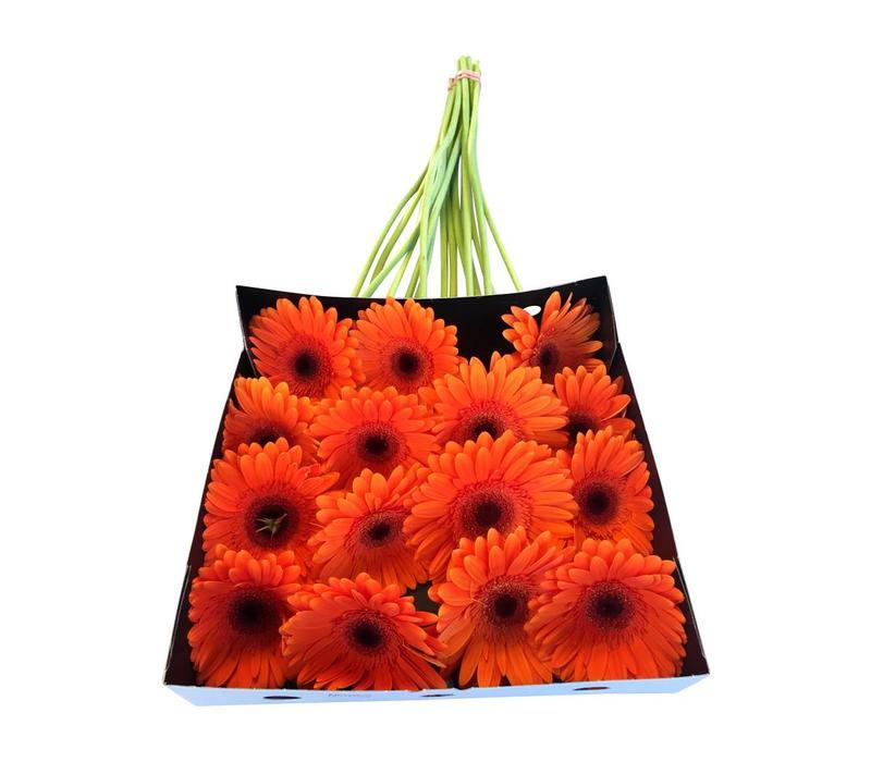 25 Gerbera Candela (Orange)