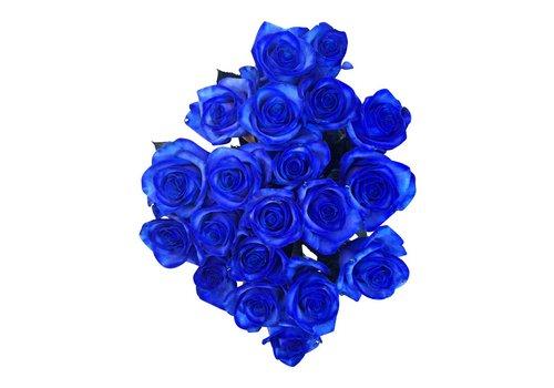10 Rosen Blau