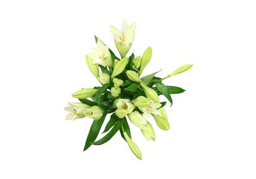 10 Lilien Watch up verzweigt