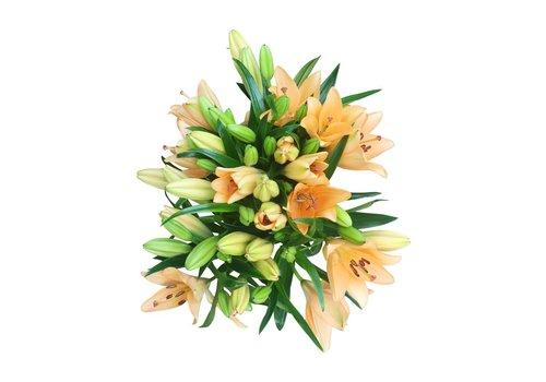 10 Lilien Heraklion