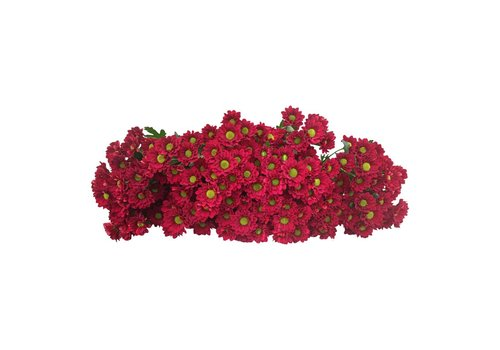5 Santini Adora (Rot)