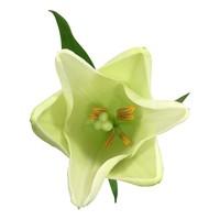 10 Lilien  Watch up (Weiß)
