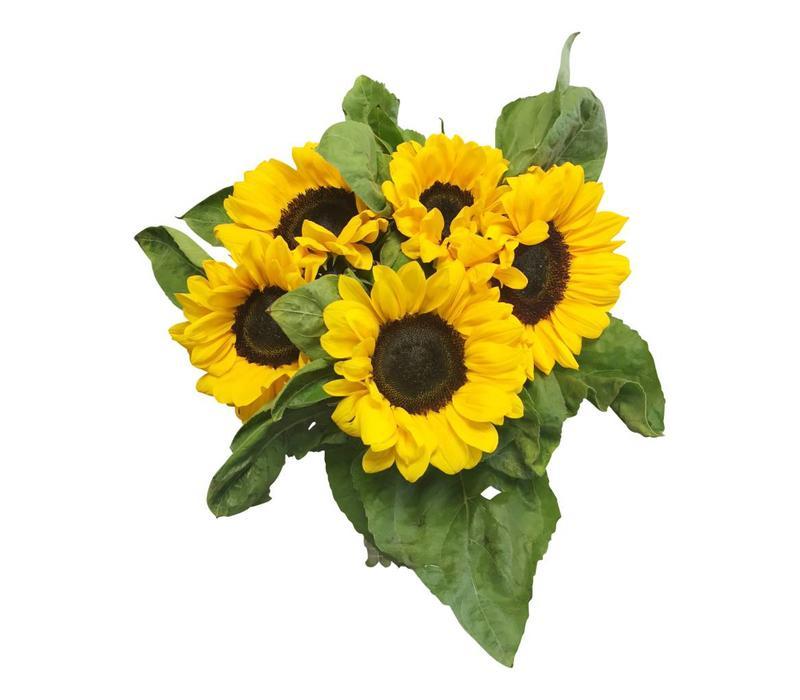 5 Sonnenblumen