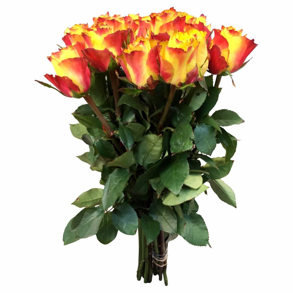 10 Rosen Gelb Orange Newsflash