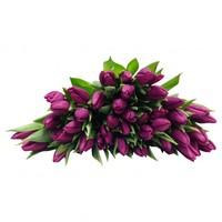 10 Tulpen Purple Prince