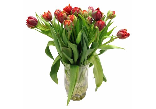 10 Tulpen Red Princess