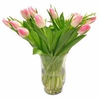 10 Tulpen First Class