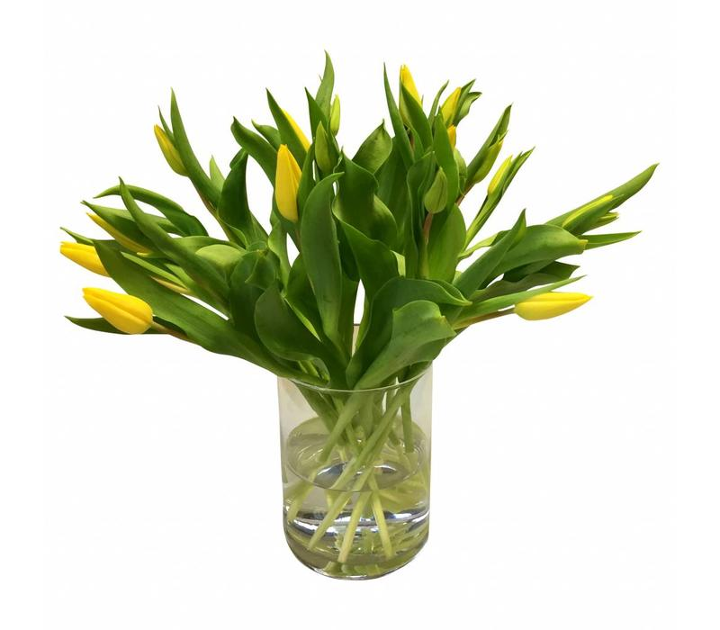10 Tulpen Stong Gold