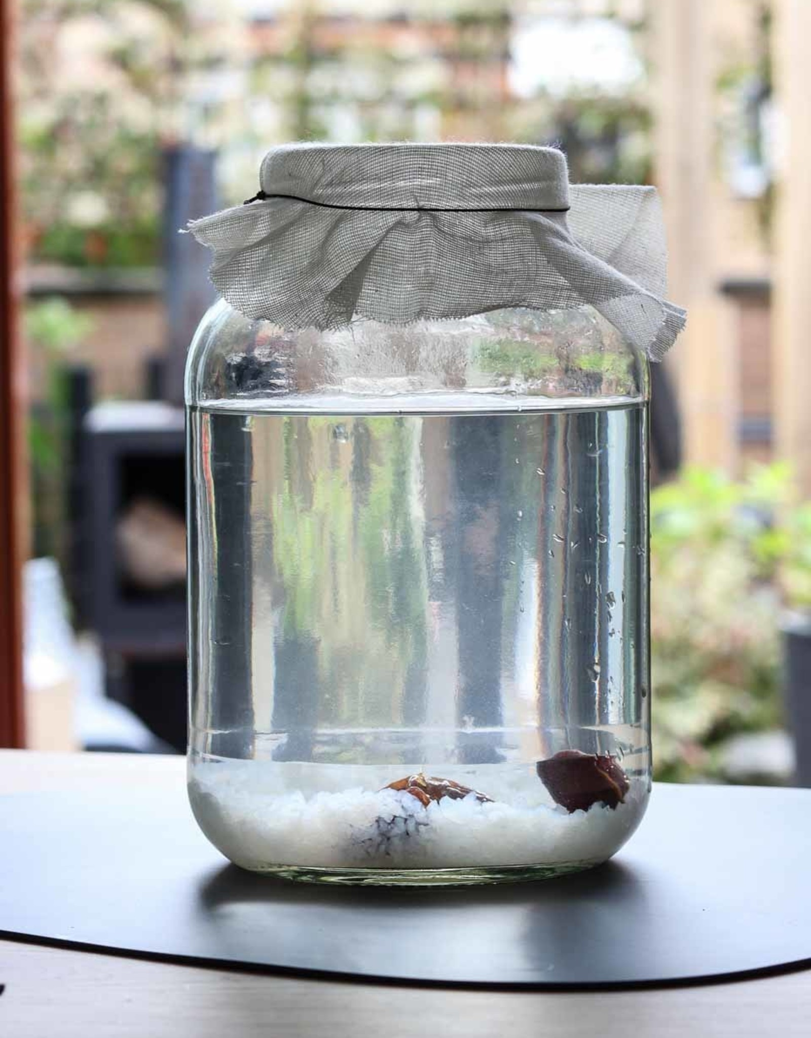 Mani Vivendi Glazen 2,5 liter kombucha of kefirpot