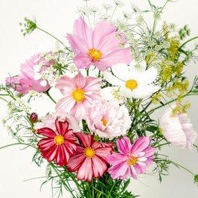 Jora Dahl Wild Bouquets Cosmos Collection