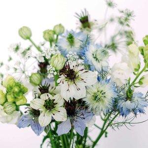 Jora Dahl Wild Bouquets Nigella Collection Samen