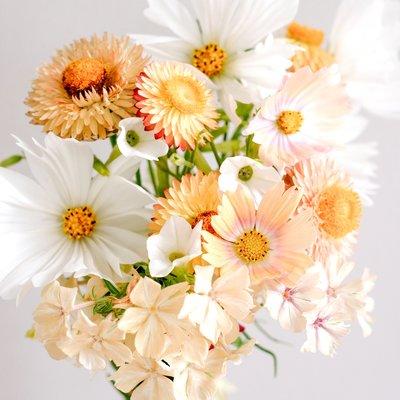 Jora Dahl Wild Bouquets Soft Apricot Collection Samen