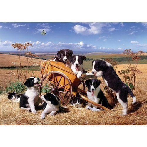 Moggies and Doggies Puzzel 1000 Stukjes