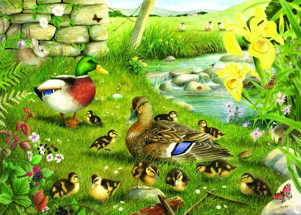 Ducks To Water Puzzel 500 Stukjes XL