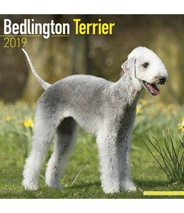 Avonside Bedlington Terrier Kalender 2019