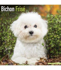 Avonside Bichon Frise Kalender 2019