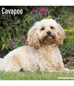 Avonside Cavapoo Kalender 2019