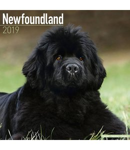 Avonside Newfoundlander Kalender 2019