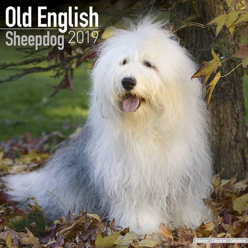 Bobtail Old English Sheepdog Kalender 2019 Avonside