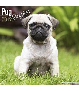 Avonside Mopshond Puppies Kalender 2019