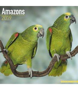 Avonside Amazone Kalender 2019