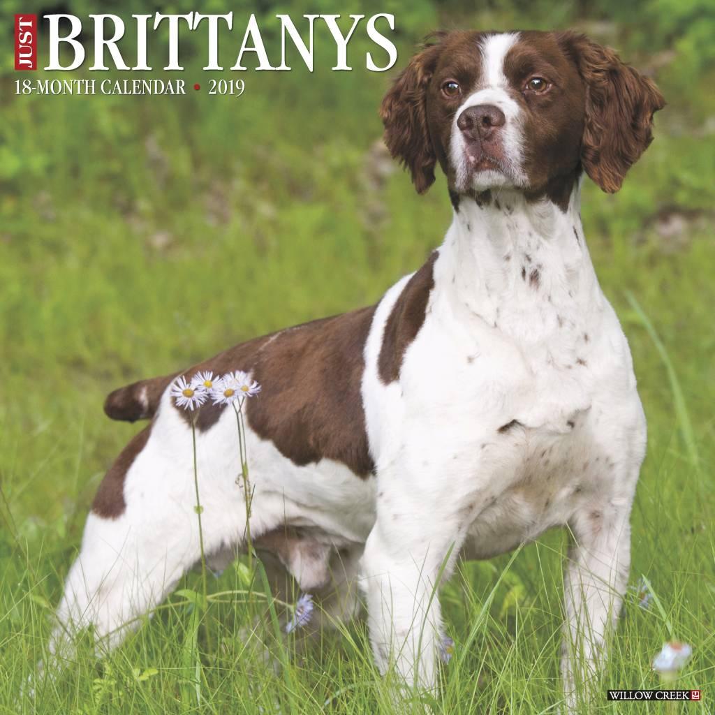 Brittany Spaniel Kalender 2019