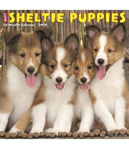 Willow Creek Sheltie - Shetland Sheepdog Puppies Kalender 2019