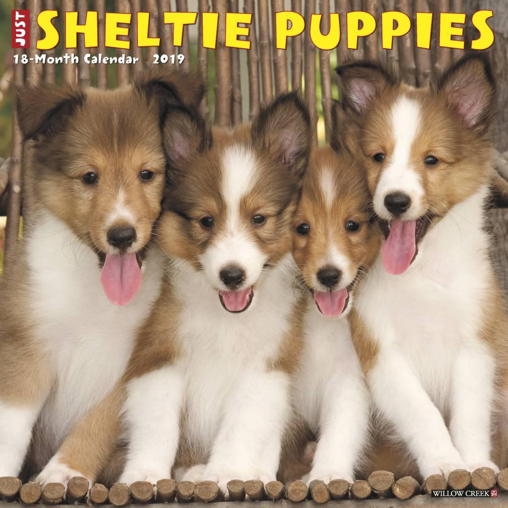 Sheltie Shetland Sheepdog Puppies Kalender 2019