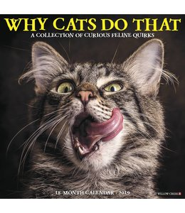Willow Creek Why Cats Do That Kalender 2019