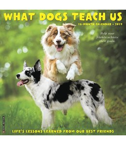 Willow Creek What Dogs Teach Us Kalender 2019