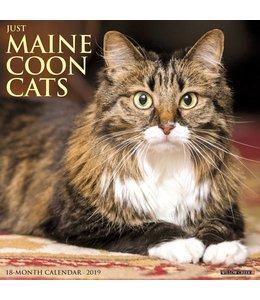 Willow Creek Maine Coon Kalender 2019