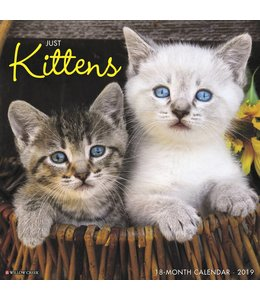 Willow Creek Kittens Kalender 2019